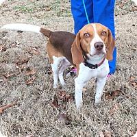 Adopt A Pet :: Hess - Brattleboro, VT