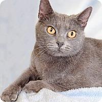 Adopt A Pet :: Parvati - Encinitas, CA