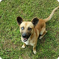Adopt A Pet :: Trevor - Duluth, GA