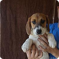 Adopt A Pet :: Finn - Oviedo, FL