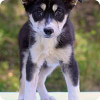 Adopt A Pet :: Bermuda - Waldorf, MD