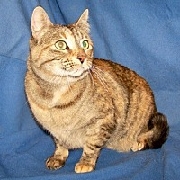 Adopt A Pet :: Gigi - Colorado Springs, CO