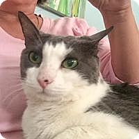 Adopt A Pet :: Kiki - Duluth, GA