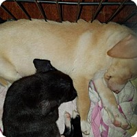 Adopt A Pet :: PUPPY-Coconut - DeLand, FL