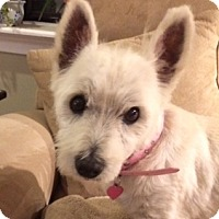 Adopt A Pet :: Summer - Washington, DC