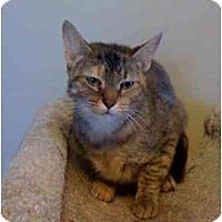 Adopt A Pet :: Halle - Milwaukee, WI