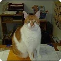 Adopt A Pet :: Butterball - Hamburg, NY