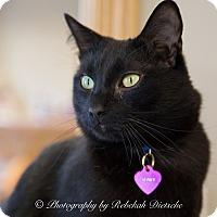 Adopt A Pet :: Prince - Byron Center, MI