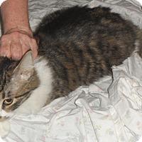 Adopt A Pet :: moose - Pensacola, FL