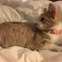 Adopt A Pet :: Roxy - Gaithersburg, MD
