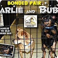 Adopt A Pet :: Charlie and Bubba - Davenport, IA