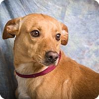 Adopt A Pet :: CHARLIE - Anna, IL