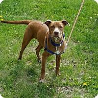 Adopt A Pet :: Sweet Pea - Cameron, MO