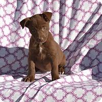 Adopt A Pet :: Kristi - Groton, MA