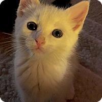 Adopt A Pet :: Fresca - Monroe, GA