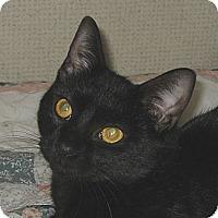 Adopt A Pet :: MISSY - 2014 - Hamilton, NJ
