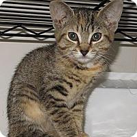 Adopt A Pet :: Holly - Catasauqua, PA
