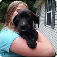 Adopt A Pet :: Sherwin (pending adopteion) - Adamsville, TN
