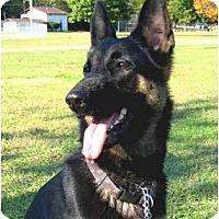 Adopt A Pet :: Lexi - Pike Road, AL