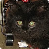 Adopt A Pet :: RUBY - 2013 - Hamilton, NJ
