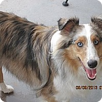 Adopt A Pet :: Skye - apache junction, AZ