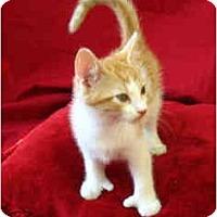 Adopt A Pet :: Thumbs - Davis, CA