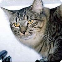 Adopt A Pet :: Apple - Medway, MA