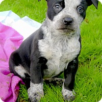Adopt A Pet :: Kyra no hang ups - Sacramento, CA