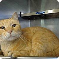 Adopt A Pet :: ROBIN - Camarillo, CA