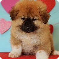 Adopt A Pet :: Jackson ADOPTION PENDING - Waldorf, MD