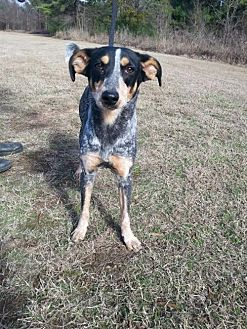 Bluetick Coonhound Mix Dog for adoption in Jefferson, Texas - Roxie