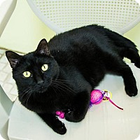 Adopt A Pet :: Ebony - St. Petersburg, FL