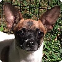 Adopt A Pet :: Jezebel - Orlando, FL