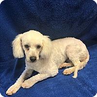 Adopt A Pet :: Quinn - New York, NY