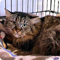 Adopt A Pet :: Tessie - Lincoln, NE