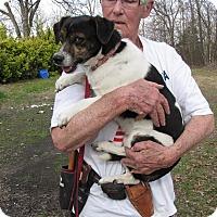 Adopt A Pet :: Ollie - Oakland, AR