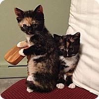 Adopt A Pet :: Kloe and Kaci - Pittstown, NJ