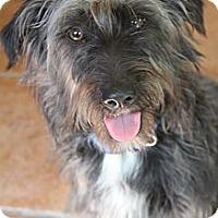 Adopt A Pet :: Jack Black - Wytheville, VA