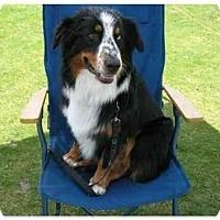Adopt A Pet :: Buck - Orlando, FL