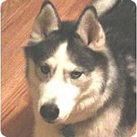 Adopt A Pet :: Koda - Kettle Falls, WA