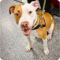 Adopt A Pet :: Pippi - Mesa, AZ