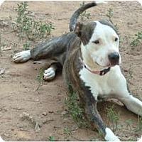 Adopt A Pet :: Pinky - E Windsor, CT