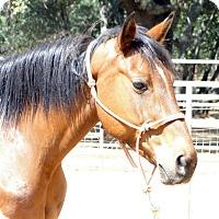 Adopt A Pet :: Kona - El Dorado Hills, CA