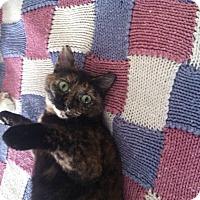 Adopt A Pet :: Cedar - Plainville, MA