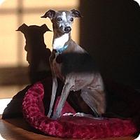 Adopt A Pet :: Fawn - Homewood, AL