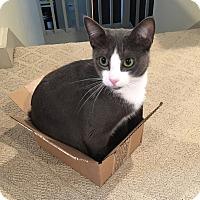 Adopt A Pet :: Barbi - Plainville, MA