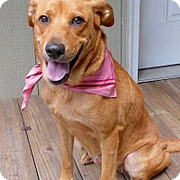 Adopt A Pet :: Mamma Mia - Baton Rouge, LA