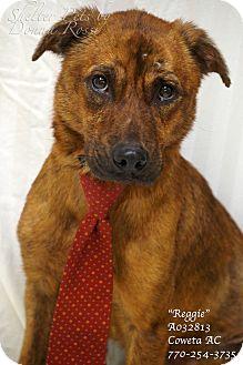 Plott Hound/German Shepherd Dog Mix Dog for adoption in Newnan City, Georgia - Reggie (aka Willard)