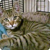 Adopt A Pet :: Aristocat - North Highlands, CA