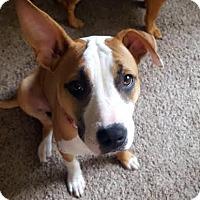 Adopt A Pet :: Cheez-It-Adopted! - Detroit, MI